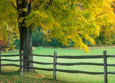 green, landscapes, nature, trees, autumn, grass - related desktop wallpaper