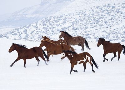 snow, animals, horses - desktop wallpaper