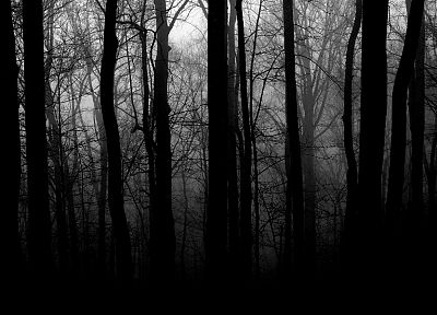 trees, forests, grayscale - desktop wallpaper