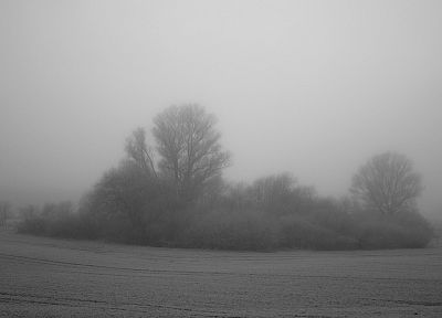 trees, gray, fog, bushes - random desktop wallpaper