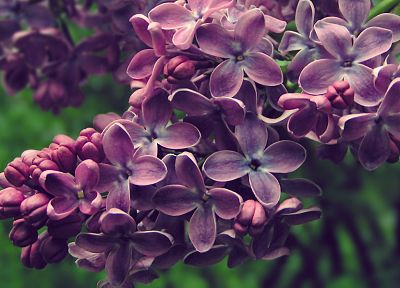 nature, flowers, spring, Blossom, lilac, purple flowers - related desktop wallpaper