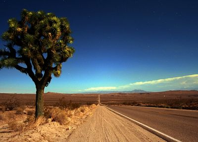trees, deserts, roads, joshua tree - random desktop wallpaper