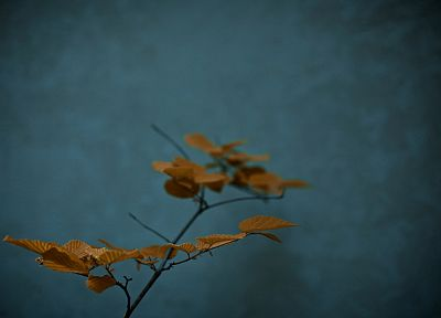leaves, plants, potted plant - random desktop wallpaper