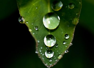 nature, leaves, plants, water drops, macro - desktop wallpaper