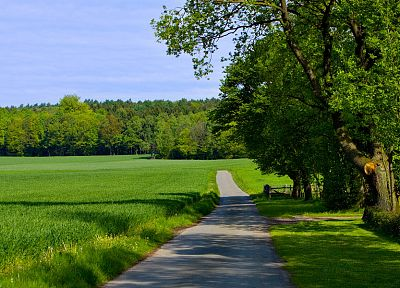 green, nature, trees, grass, paths, roads - related desktop wallpaper