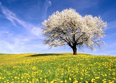 trees, flowers, meadows - desktop wallpaper