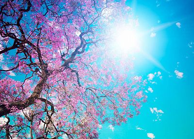 nature, cherry blossoms, flowers, spring, blossoms, sunlight, blue skies, sun flare - related desktop wallpaper