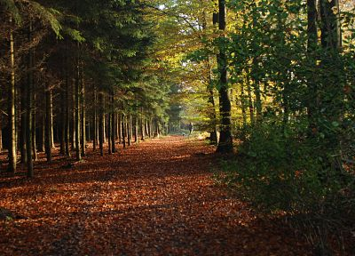 nature, trees, autumn, forests, leaves, fallen leaves - random desktop wallpaper