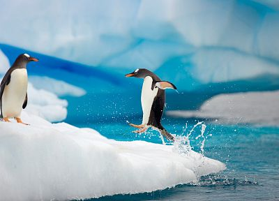 water, ice, snow, birds, jumping, penguins, splashes - related desktop wallpaper
