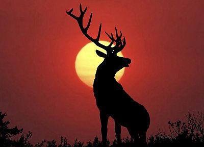 sunset, deer, elk - random desktop wallpaper