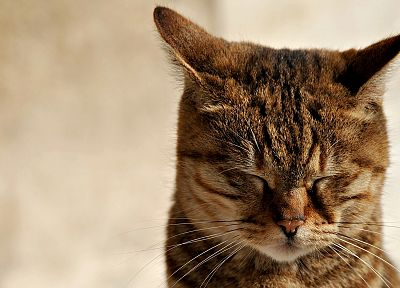 cats, animals, closed eyes - related desktop wallpaper