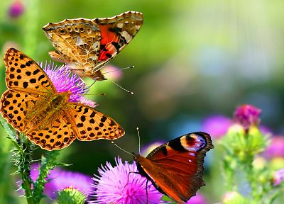 nature, flowers, insects, depth of field, butterflies - related desktop wallpaper