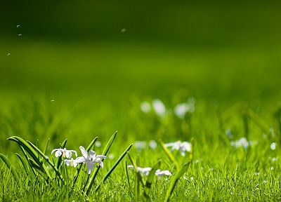 flowers, grass, macro - desktop wallpaper