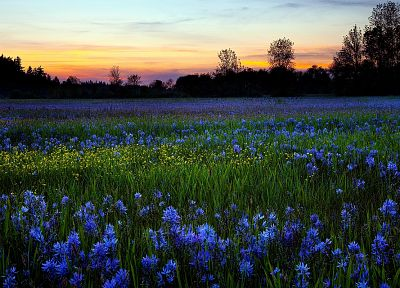 landscapes, flowers, blue flowers - desktop wallpaper