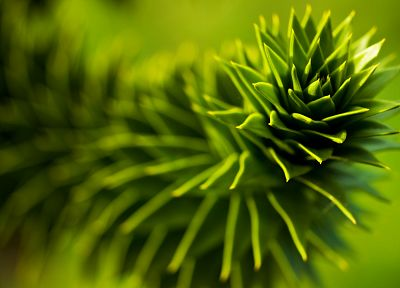green, nature, plants, macro - related desktop wallpaper
