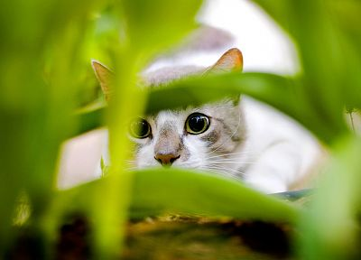 nature, cats, animals, hunting - related desktop wallpaper