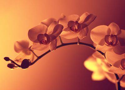 nature, flowers, pink, filter, orchids, pink background - related desktop wallpaper