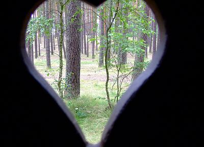 nature, forests, hearts - related desktop wallpaper