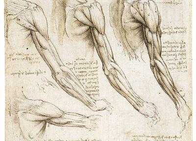 anatomy, Leonardo da Vinci - Free Wallpaper / WallpaperJam.com