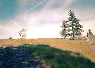 clouds, landscapes, trees, shadows, plains, evergreens - related desktop wallpaper