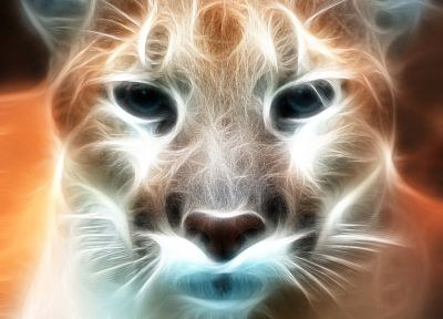 close-up, animals, Fractalius, puma - related desktop wallpaper