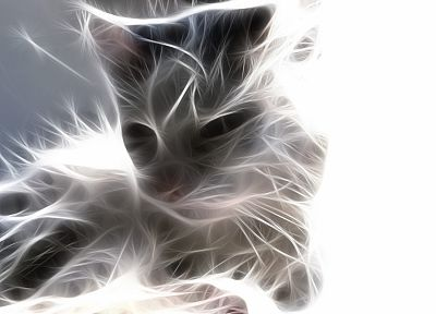 cats, animals, Fractalius - related desktop wallpaper