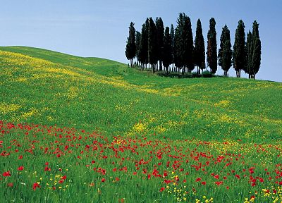 flowers, Italy, poppy - related desktop wallpaper