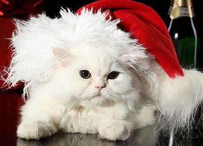 kittens, Christmas outfits - random desktop wallpaper