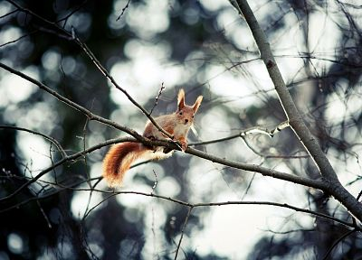trees, animals, squirrels, depth of field, branches - related desktop wallpaper