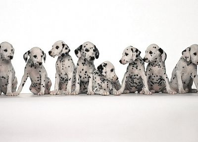 animals, dogs - related desktop wallpaper