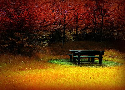 trees, autumn, bench - desktop wallpaper