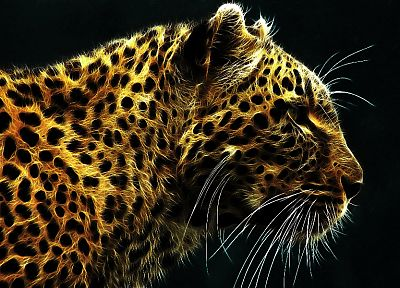 animals, leopards - random desktop wallpaper