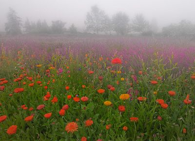 flowers, meadows, mist - random desktop wallpaper