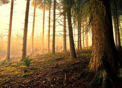 landscapes, nature, forests, moss - related desktop wallpaper