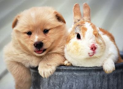 animals, dogs, rabbits - related desktop wallpaper