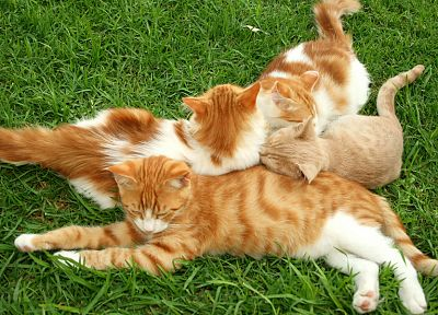 cats, grass, kittens - random desktop wallpaper