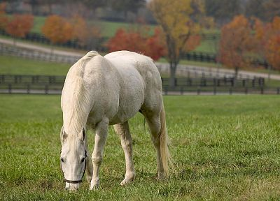 green, nature, animals, horses, white horse - related desktop wallpaper