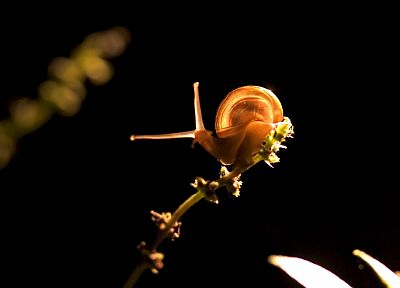 nature, snails, black background, molluscs - desktop wallpaper