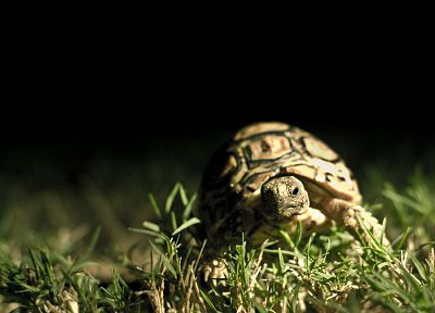 grass, turtles - related desktop wallpaper