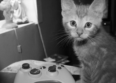 cats, animals, monochrome, Xbox 360 - related desktop wallpaper