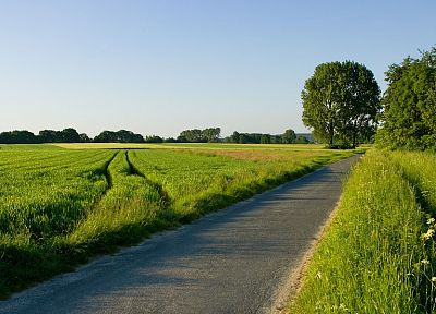landscapes, nature, trees, fields, roads - related desktop wallpaper