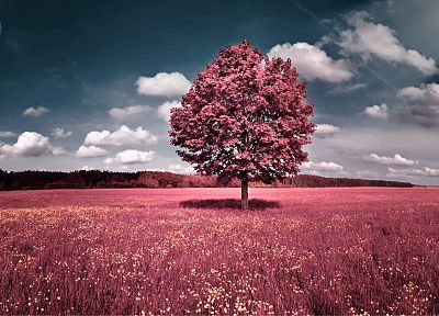 clouds, landscapes, trees, flowers, pink, grass, fields, hills, skyscapes, photo manipulations - related desktop wallpaper