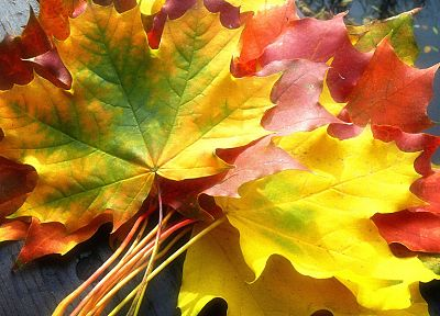 nature, autumn, leaves, fallen leaves - desktop wallpaper