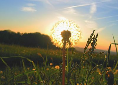 sunrise, landscapes, Sun, grass, dandelions - desktop wallpaper