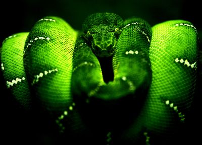 green, snakes, branches - desktop wallpaper