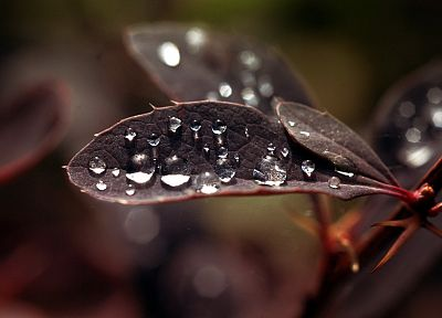 nature, leaves, water drops, macro, depth of field - desktop wallpaper