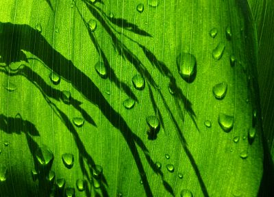 green, nature, leaves, water drops - random desktop wallpaper
