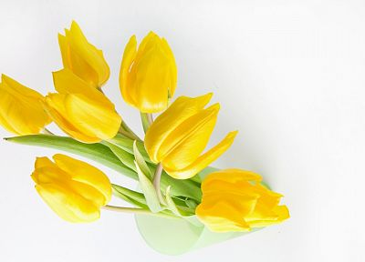 flowers, tulips, yellow flowers - desktop wallpaper