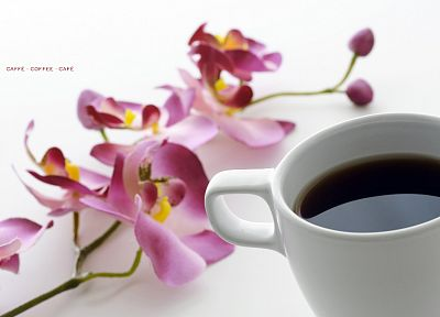 flowers, coffee, beverages, white background, orchids - desktop wallpaper
