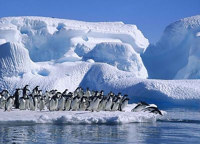 hope, penguins, Antarctica, bay - random desktop wallpaper